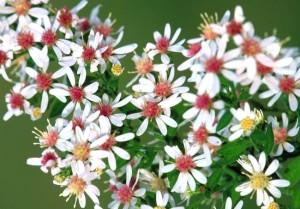 conferenza e corso su fiori di bach
